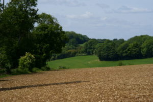 View From Ashtead Hill, Surrey - Photo © Peter Trimming (cc-by-sa:2.0)